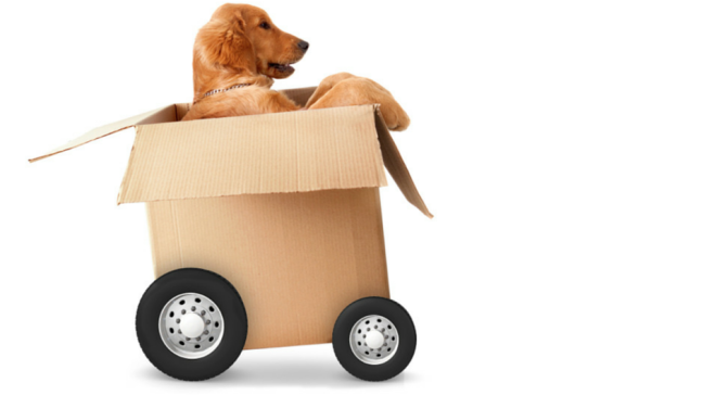 What-to-Consider-When-Moving-with-Pets